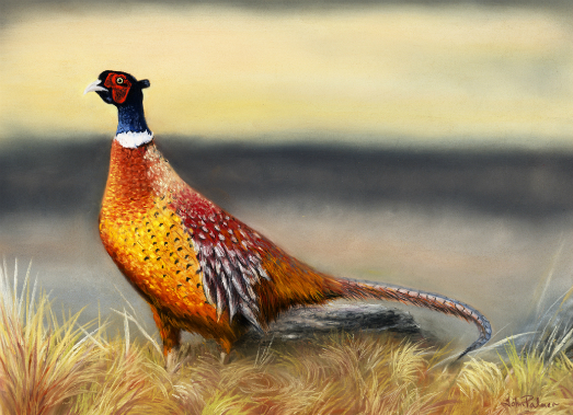 Autumn Glory Pheasant Greeting Card