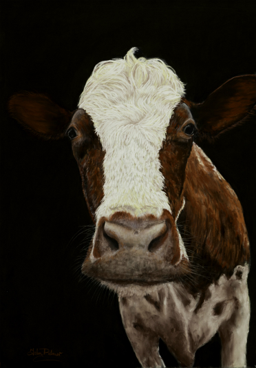 Ayrshire Cow Greeting Card