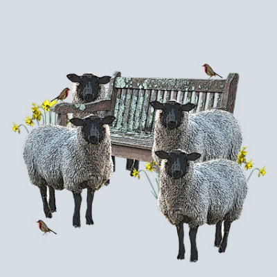 Daffodils and Sheep Greeting Card