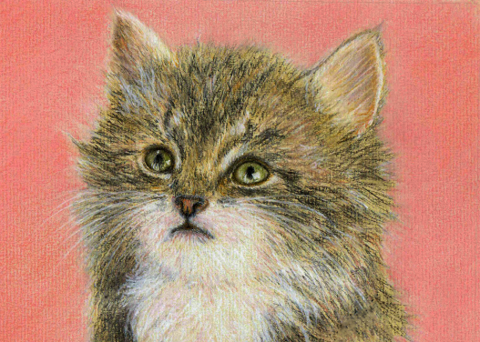 Kute Kitten Greeting Card