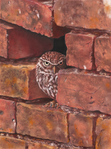Little Owl In Wall Greeting Card