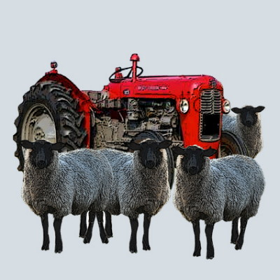 Red Tractor and Sheep Greeting Card