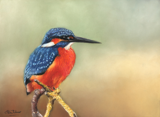 The Waiting Game Kingfisher Greeting Card