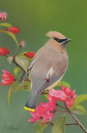 WaxWing Cropped Greeting Card