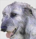 Rory the Irish Wolfhound at Irish Shopper